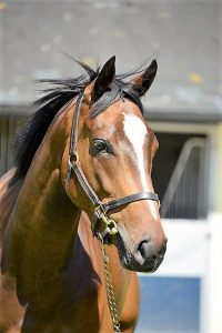 TWO NEW RECRUITS TO OUR OUTSTANDING TEAM TO BE TRAINED BY ALAN KING & CHAMPION TRAINER NICKY HENDERSON